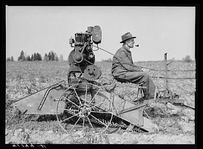 10. Potato farmer on his horse-drawn digger on a small farm.  (Caribou,1940)