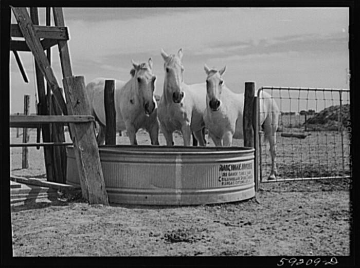 16. Horses take a drink in Scottsbluff.