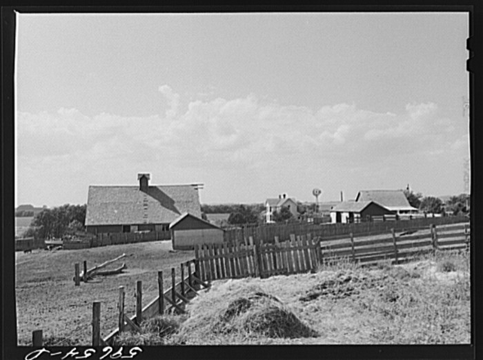 12. The barn and feeding pens at Tom Reed farm in Lexington form an antiquated landscape.