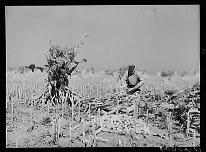 """Shucking corn on Greenhills, Ohio farm."""