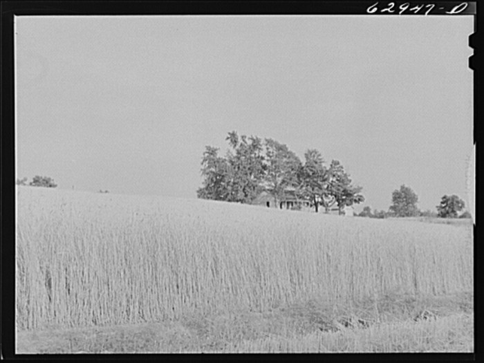 6. This picture of the wheat farm in Daviess County was taken in 1941.