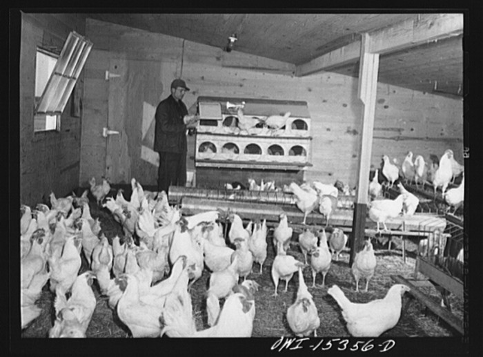 """""""Rio Grande, Gallia County, Ohio. Mr. Younkers in the poultry house on Fred Bowers farm. He was hired here after he completed a farm labor training course at Ohio State University."""""""