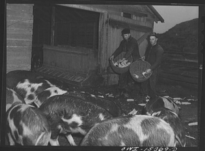 "17. ""Rio Grande, Gallia County, Ohio. Jim Stevens and Samuel George feed 100 head of hogs on Harry Linebaugh's farm."""