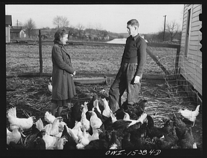 """""""Rio Grande, Gallia County, Ohio. Reed and Evelyn Hall have their own chickens on dairy farm where Mr. Hall was employed as a result of the training program."""""""