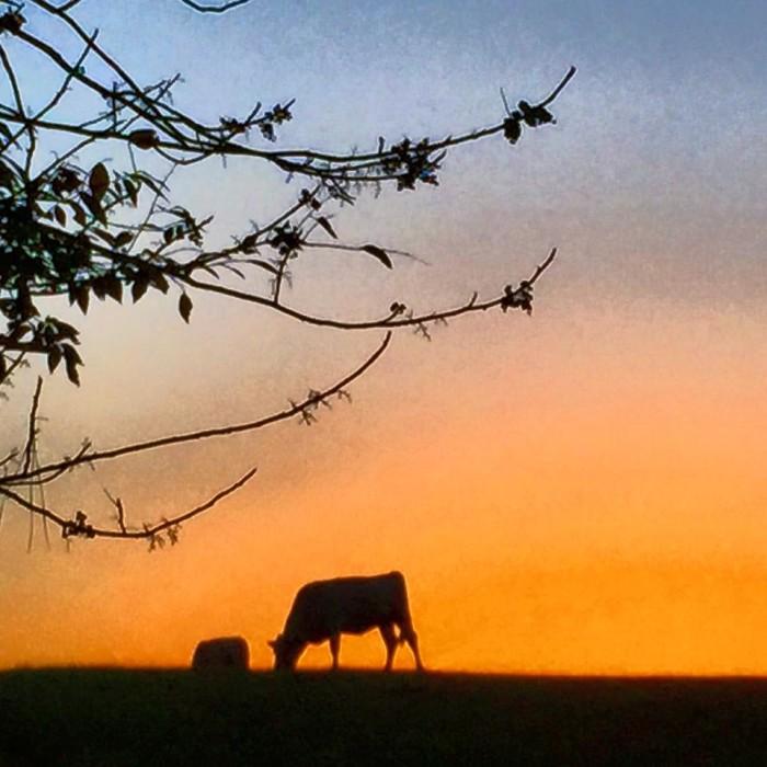 9. Expansive Pastures