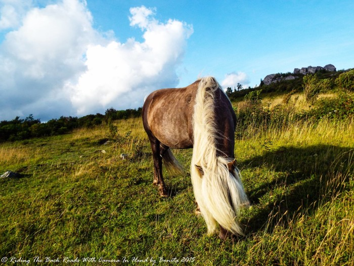 9. A wild pony grazing on the mountainside at Grayson Highlands State Park.