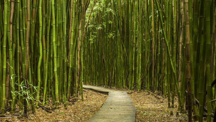 9) Hike through a magnificent bamboo forest, like Pipiwai Trail on Maui.