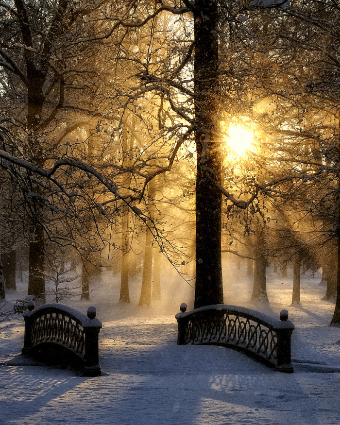 9.Snow and Sun in Tower Grove Park, St. Louis