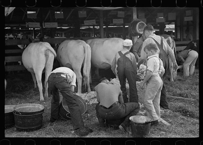 9.  4-H Club boys taking care of their cows, State Fair, Rutland, Vermont