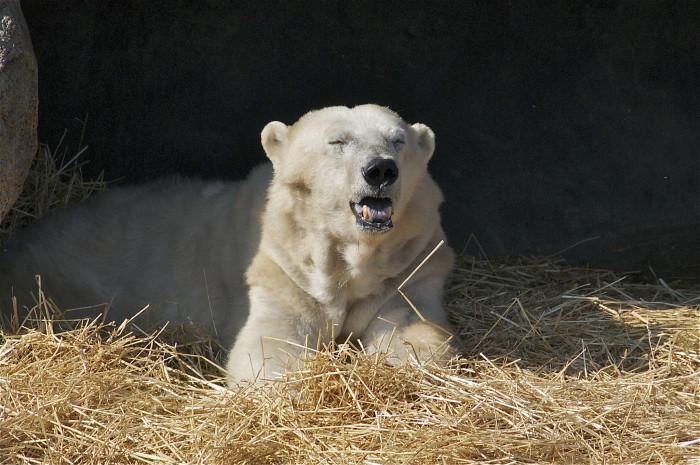 1) A Polar bear cave at Detroit Zoo, Royal Oak