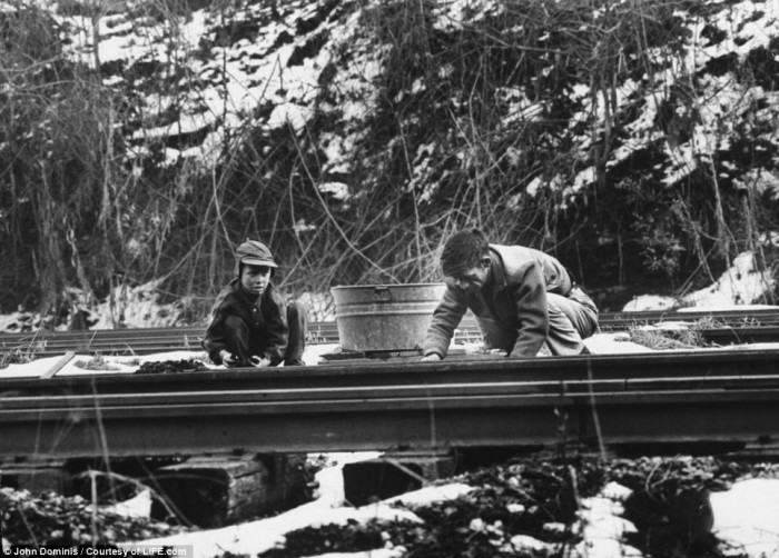 4.  A father works with his son on the railroad to earn money. There were no child labor laws during those years.