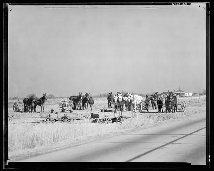 "1. ""Mule teams near Montgomery, Alabama."""