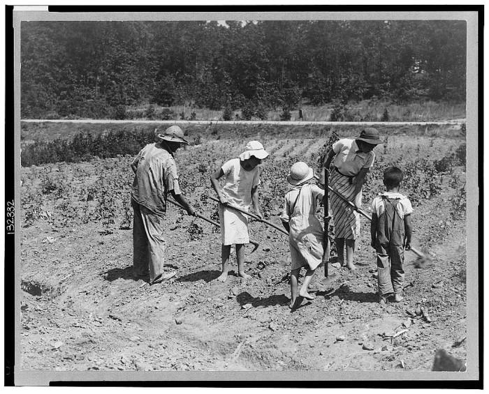 12. Alabama tenant farmer and children. Family labor in cotton, Anniston - 1936.