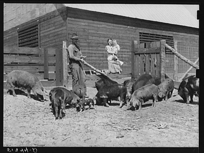 10. Mr. and Mrs. George Johnson and their hogs. (Pike County, Alabama - 1939)