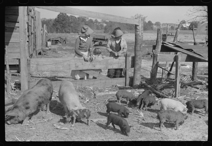 11. Part of George Cowley's family looking over their pigs. (Pike County, Alabama - 1939)