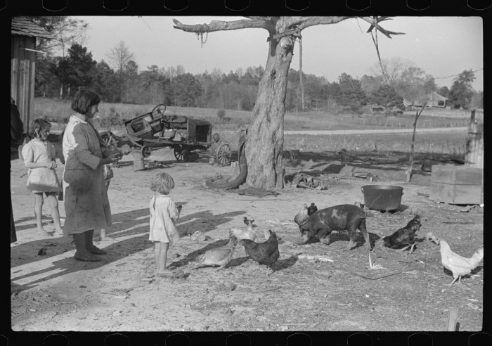12. Mr. Tillery's wife and children with a few of their chickens and pigs. (Pike County, Alabama - 1939)