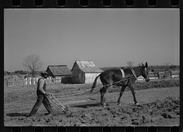 5. A farmer plowing at Gee's Bend. (Wilcox County, Alabama - 1937)