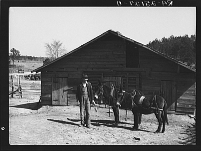 6. Joe Handley standing outside his barn with his beautiful horses. (Walker County, Alabama - 1937)
