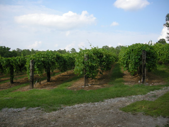 Alabama is home to some pretty incredible vineyards and wineries.