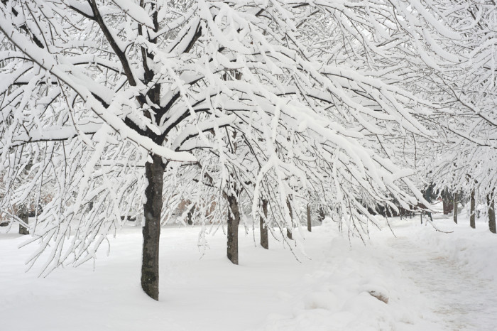 5. The trees cut abstract lines through the snow in this beautiful image captured in Charlottesville.