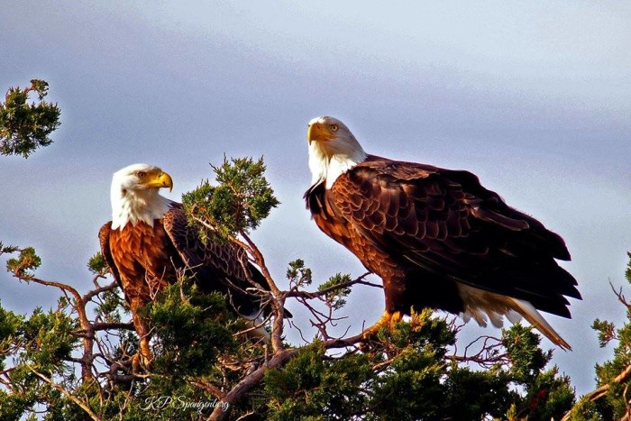 "6. A spectacular shot of ""Liberty and Freedom,"" taken by Karen Priscilla Spangenberg in Atlantic County."