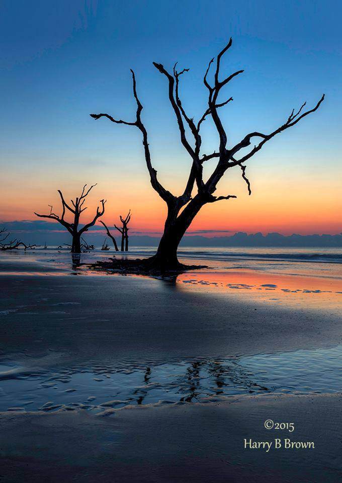 4. Bull Island in the Cape Romain National Wildlife Refuge, located north of Charleston. Photo by Harry B Brown.