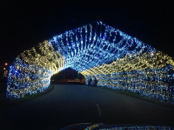 Unique Christmas Lights
