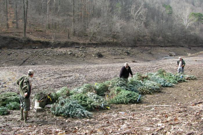 4. Christmas trees