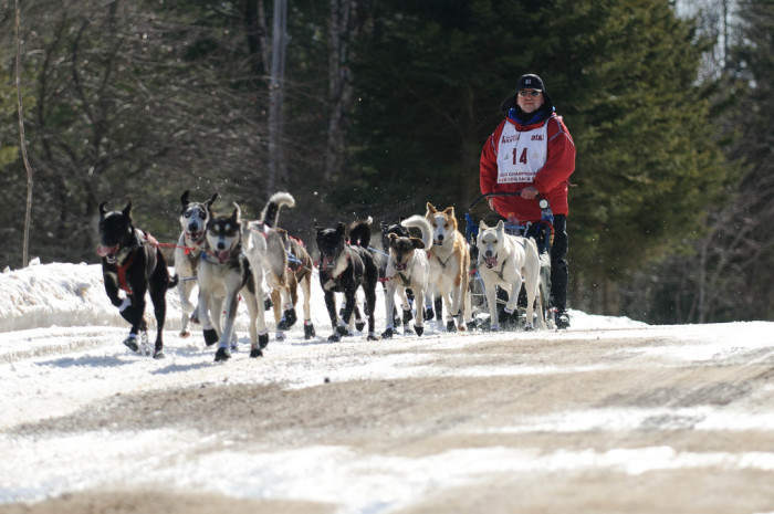 10) Dog sledding in Grand Marais