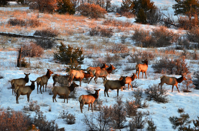 3. Perhaps this herd of elk is also wowed by the snow-covered beauty of the land surrounding Bandelier National Monument, near Los Alamos.