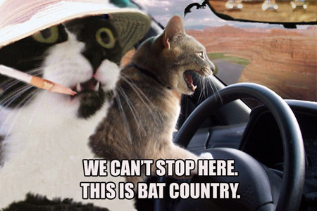 7. Fear and Loathing in Transylvania County.