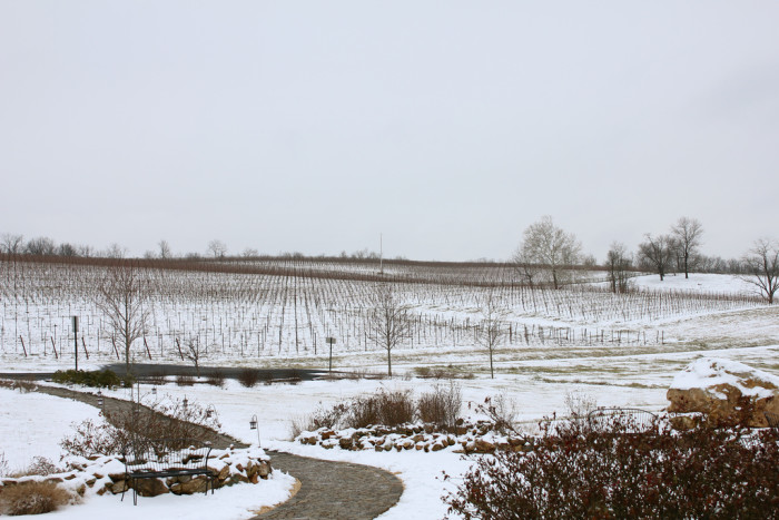 11)  Miles of beautiful frozen ground at Black Ankle Vineyard.