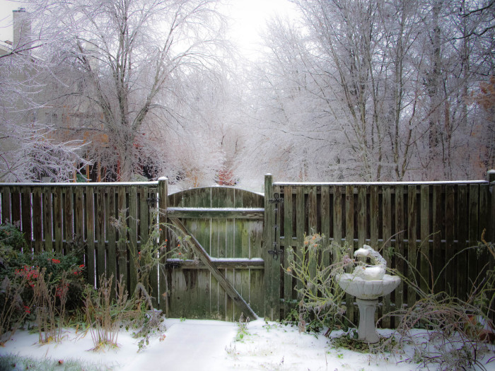 14. The composition of this photo, taken during an early December ice storm in Manassas, is nothing short of perfect.