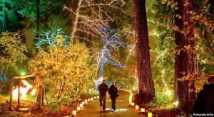 Here Are The 9 Best Christmas Light Displays In Oregon. They're Incredible.