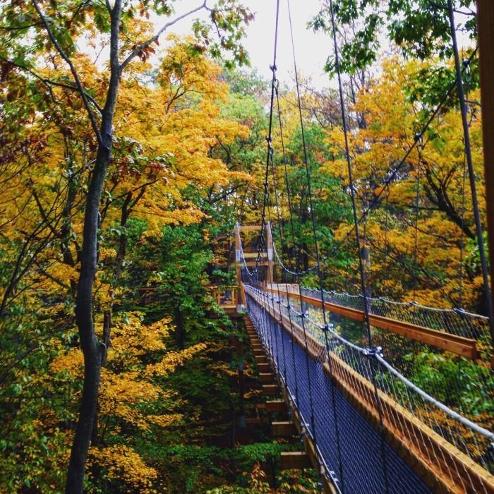 6. Holden Arboretum canopy walk in Kirtland, OH