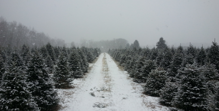 1. Our Christmas tree farms GET IT RIGHT.