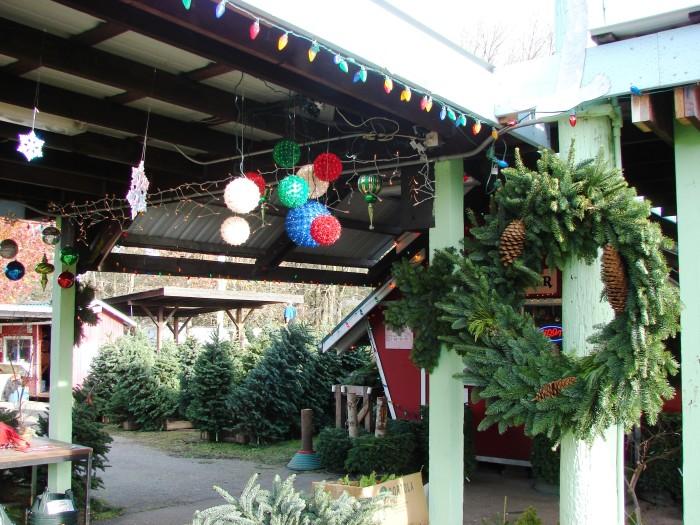 5. Your nearest Christmas tree farm.