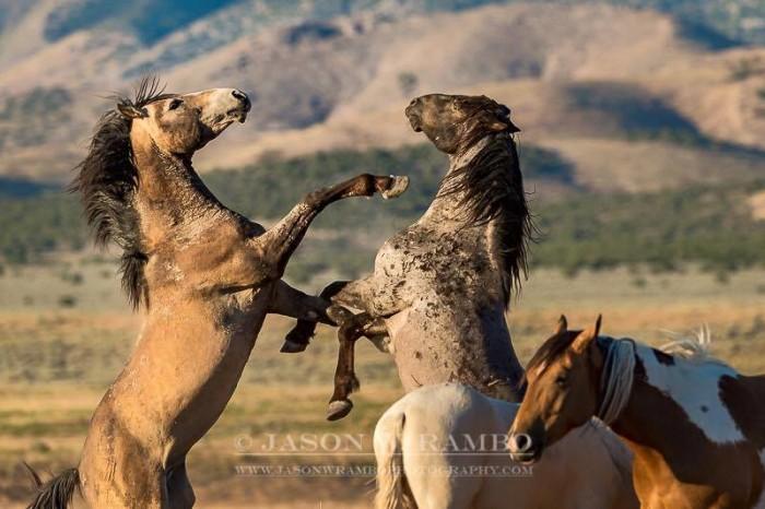 20. Wild Mustangs, by Jason W. Rambo Photography