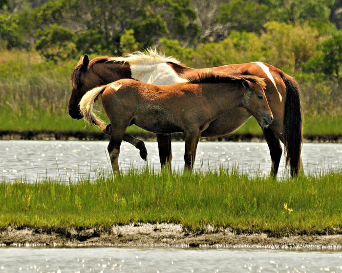 3) Assateague Island
