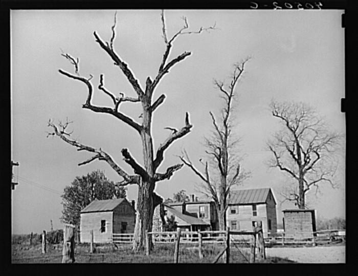 25. Loudoun County farm near Sterling in 1940.