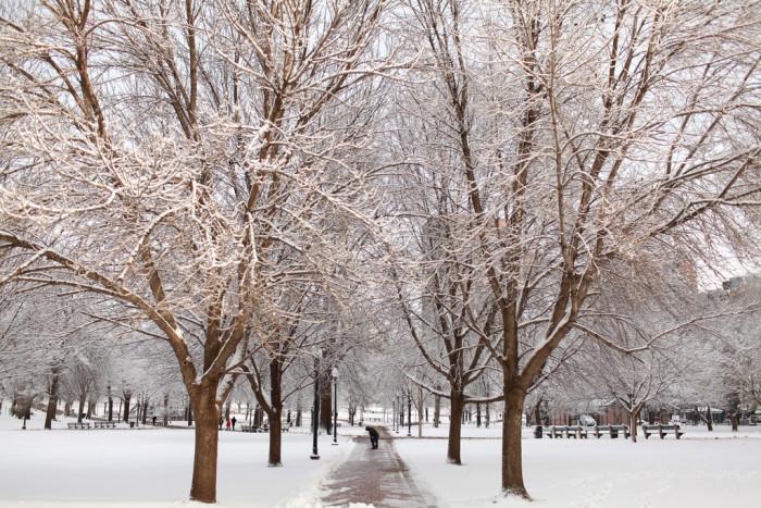 2. Boston Common. Just like strolling through a snowglobe.