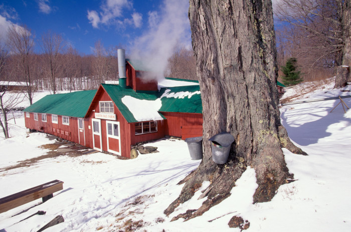 15. They're maple sugaring at South Face Farm in Ashfield. A cold clear day like this one is perfect for a sweet treat.