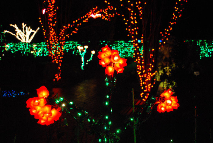 9 places to see christmas lights in maryland 6 garden of lights wheaton aloadofball Images