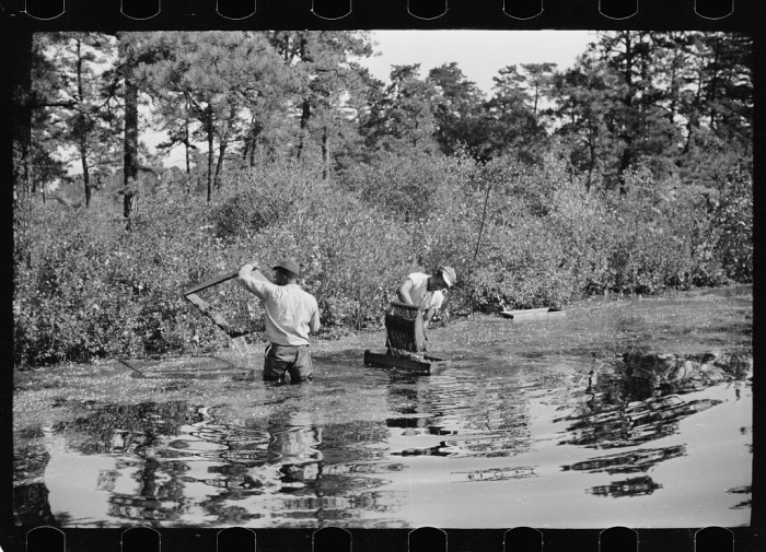 4. A cranberry bog in Burlington County.