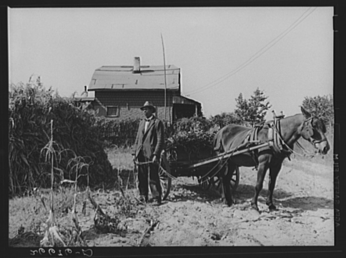 12. Vacant lots are used as gardens in Glassboro, 1938.