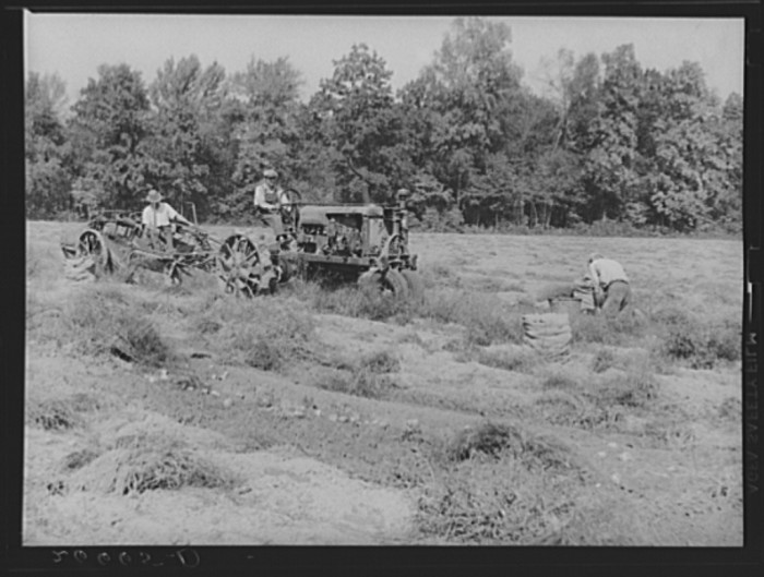 1. A mechanical potato digger in Monmouth County.