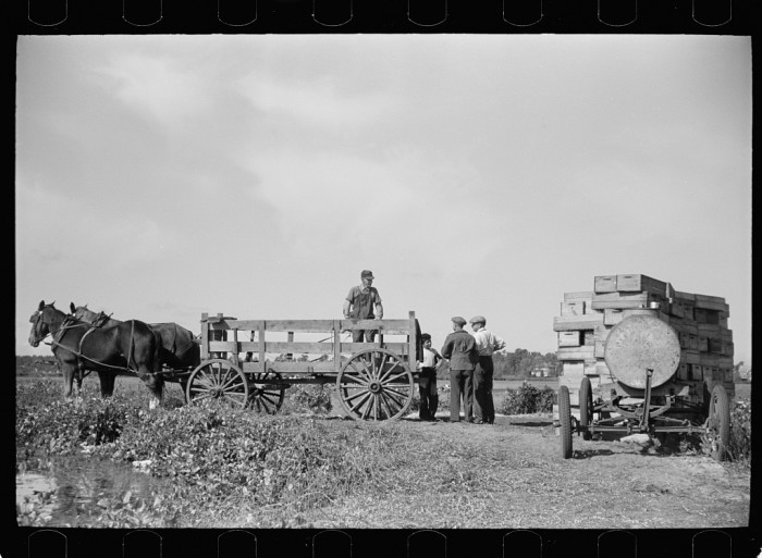 10. A horse-drawn wagon to transport cranberries from a Burlington County farm.