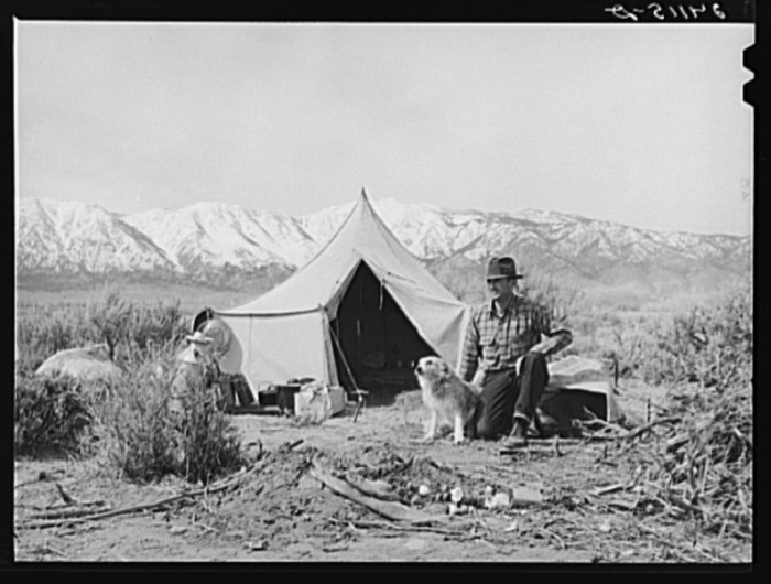"10. ""Basque sheepherder camped on the range. Dangberg Ranch, Douglas County, Nevada."""