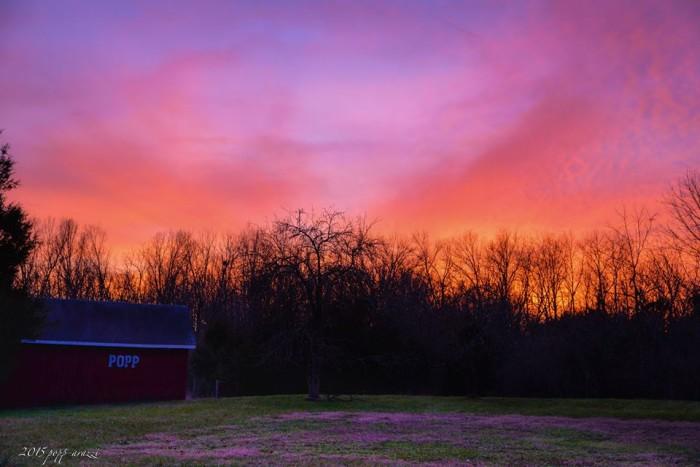 6. Pink skies in Prospect