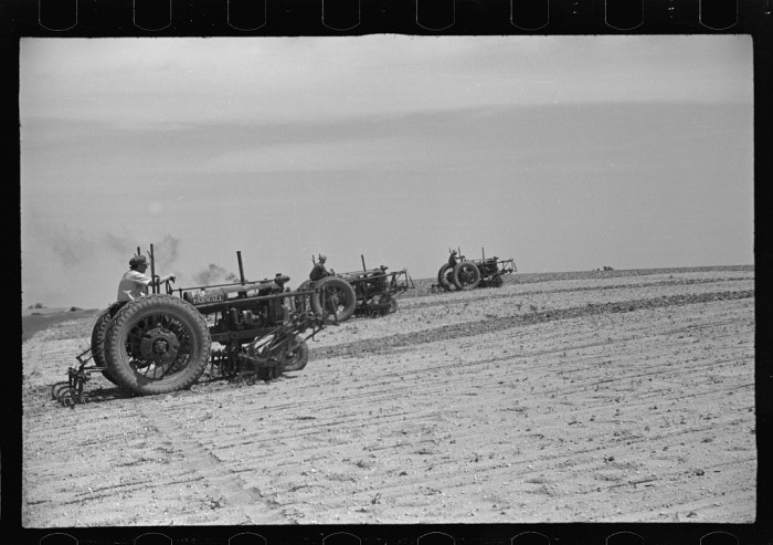 13. Seabrook Farms, between Vineland and Bridgeton, supplied beans and peas to much of the Baltimore, Philadelphia and Washington DC area, 1936.
